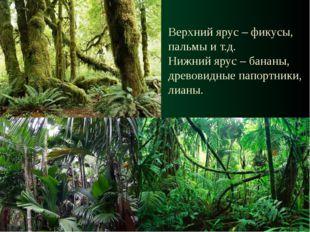 Верхний ярус – фикусы, пальмы и т.д. Нижний ярус – бананы, древовидные папорт