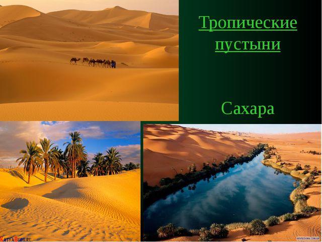 Тропические пустыни Сахара