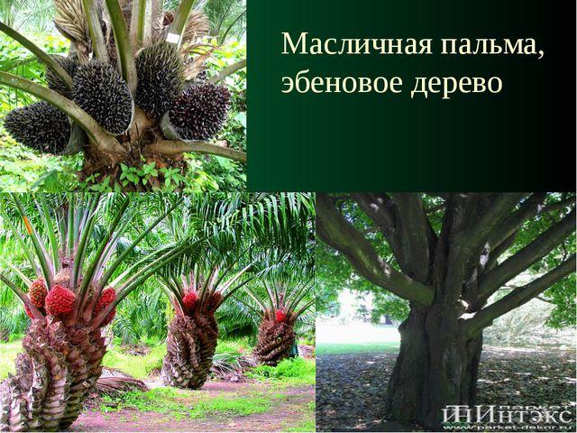 Масличная пальма, эбеновое дерево
