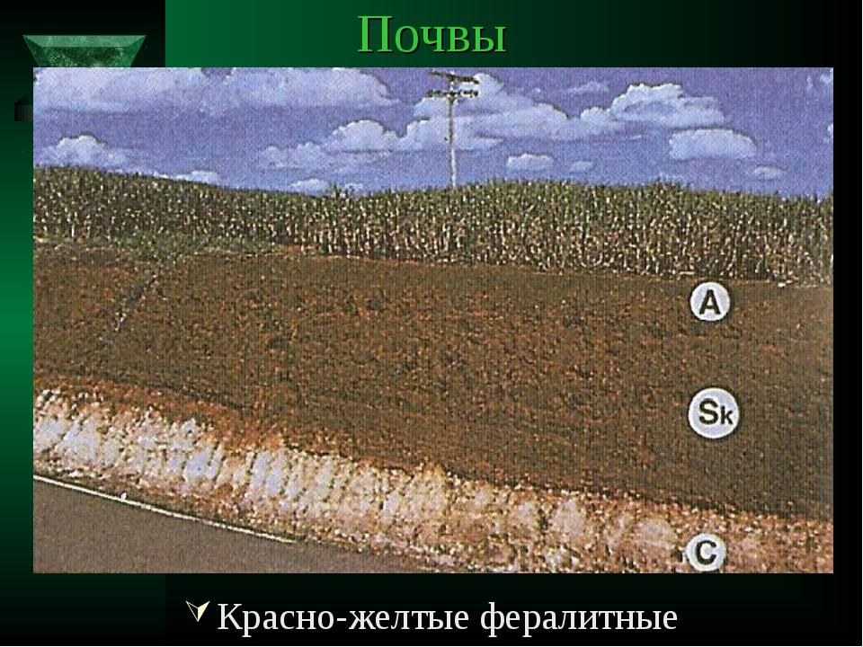 Почвы Красно-желтые фералитные