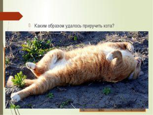 Каким образом удалось приручить кота? Как из ворюги он превратился в сторожа?