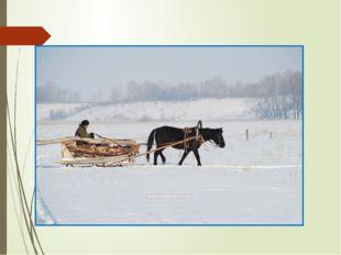 """""""Слеза скатилась у коня из глаз. Конь заржал жалобно, протяжно, взмахнул хво"""