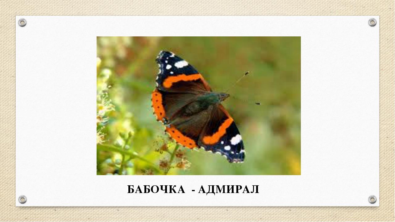 БАБОЧКА - АДМИРАЛ