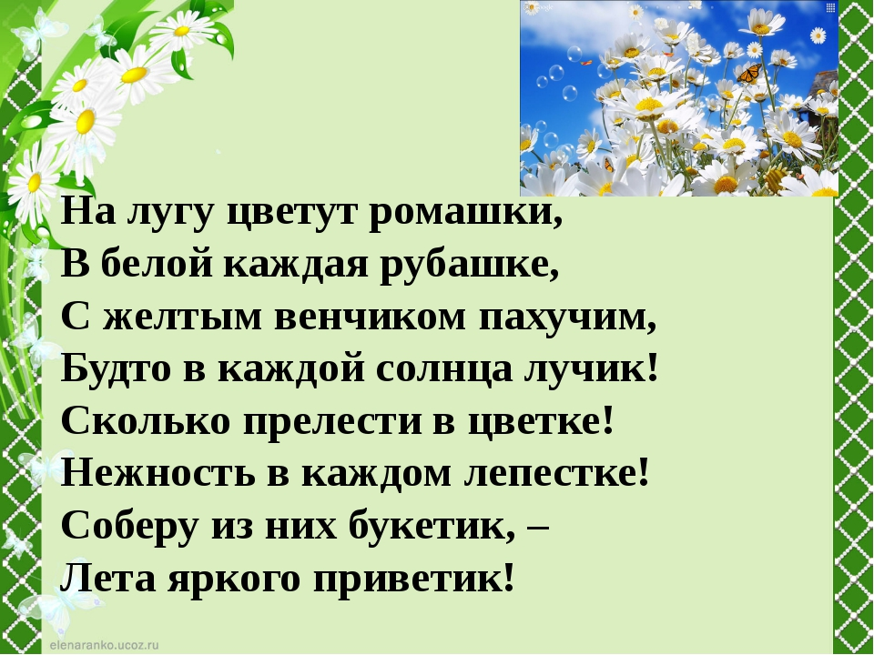 На лугу цветут ромашки, В белой каждая рубашке, С желтым венчиком пахучим,...