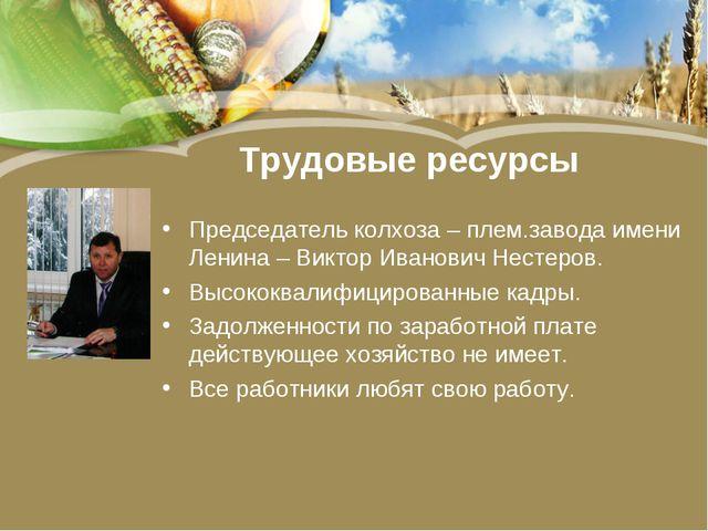 Трудовые ресурсы Председатель колхоза – плем.завода имени Ленина – Виктор Ива...