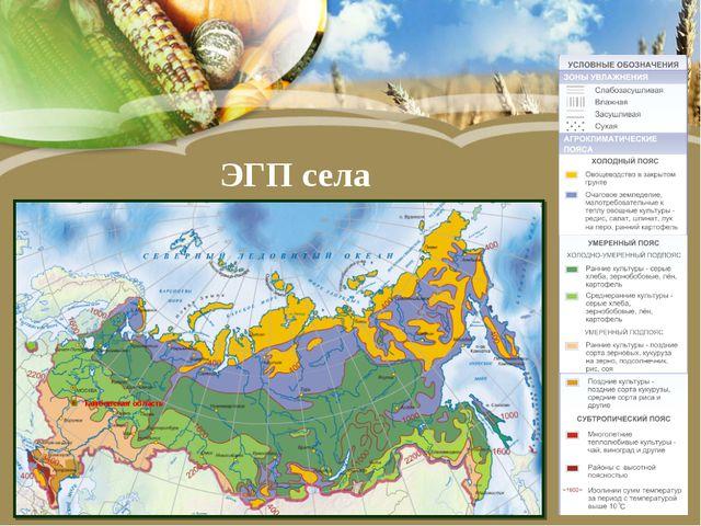 ЭГП села Тамбовская область