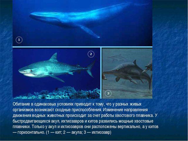 Обитание в одинаковых условиях приводит к тому, что у разных живых организмов...