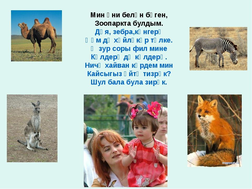 Мин әни белән бүген, Зоопаркта булдым. Дөя, зебра,көнгерә Һәм дә хәйләкәр төл...