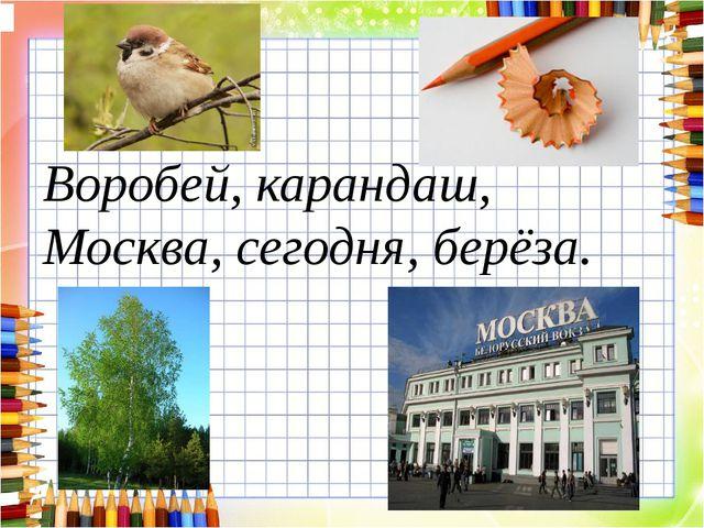 Воробей, карандаш, Москва, сегодня, берёза.