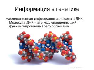 Информация в генетике Наследственная информация заложена в ДНК Молекула ДНК –