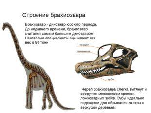 Брахиозавр - динозавр юрского периода. До недавнего времени, брахиозавр счита