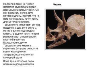 Череп. Наиболее яркой их чертой является крупнейший среди наземных животныхч