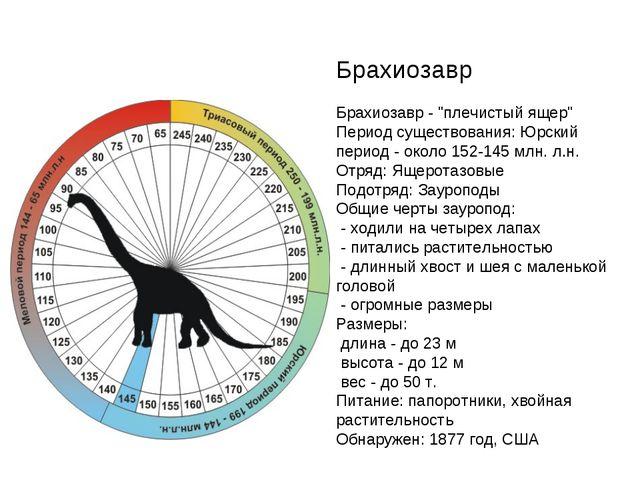 """Брахиозавр Брахиозавр - """"плечистый ящер"""" Период существования: Юрский период..."""