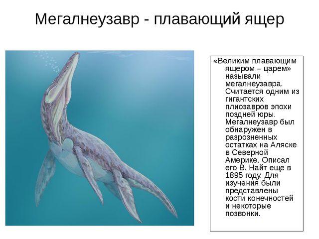 Мегалнеузавр - плавающий ящер «Великим плавающим ящером – царем» называли мег...