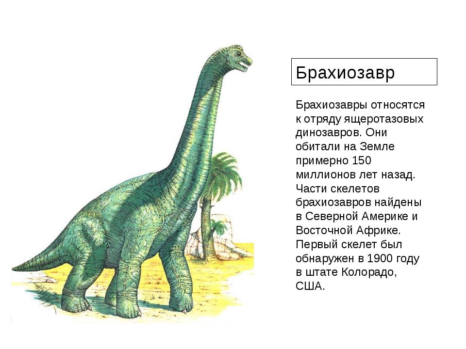 Брахиозавры относятся к отряду ящеротазовых динозавров. Они обитали на Земле...