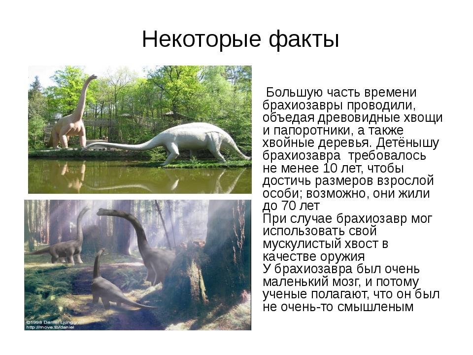 Некоторые факты Большую часть времени брахиозавры проводили, объедая древови...