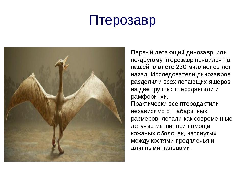 Птерозавр Первый летающий динозавр, или по-другому птерозавр появился на наше...