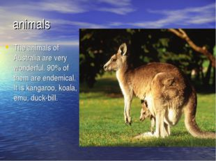 animals The animals of Australia are very wonderful. 90% of them are endemica