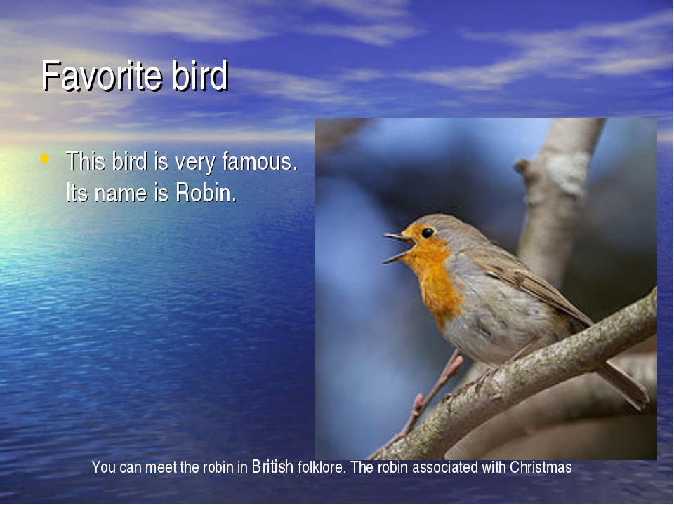 Favorite bird This bird is very famous. Its name is Robin. You can meet the r...