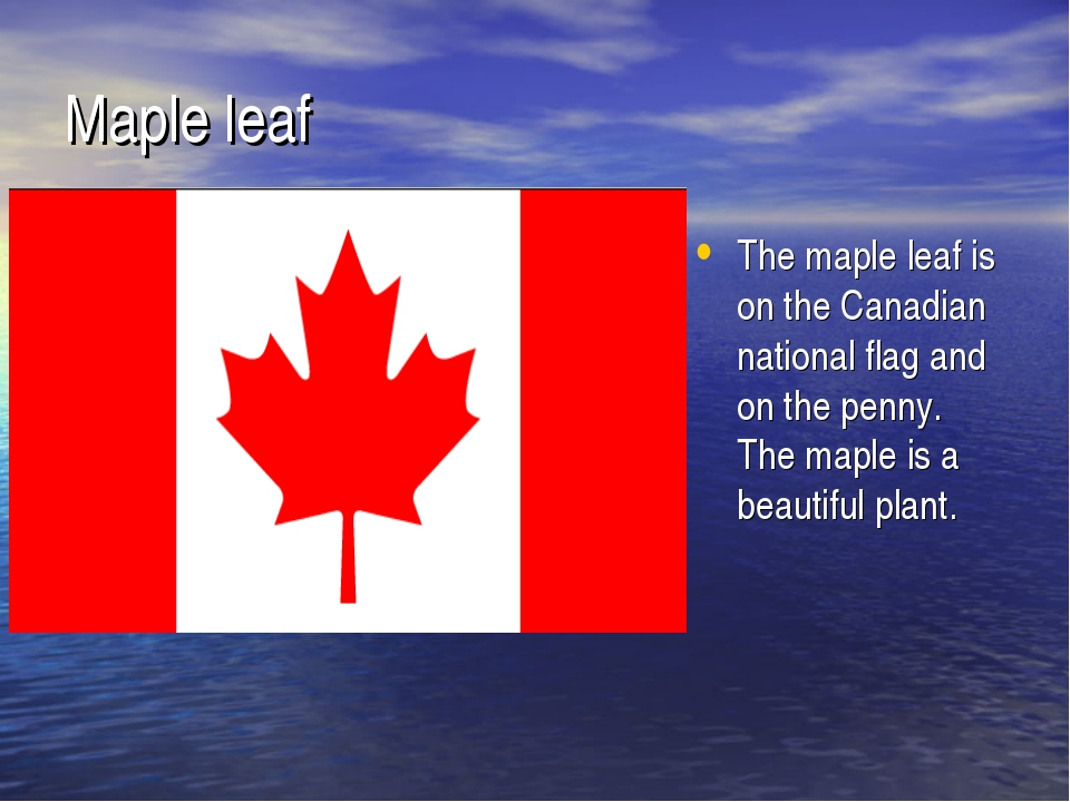 Maple leaf The maple leaf is on the Canadian national flag and on the penny....