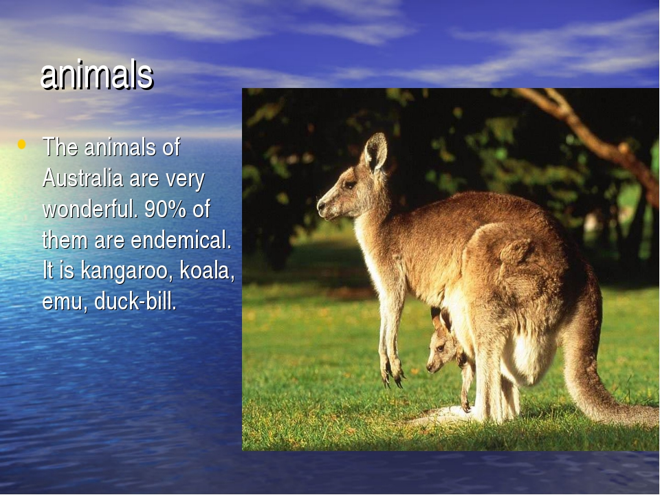animals The animals of Australia are very wonderful. 90% of them are endemica...