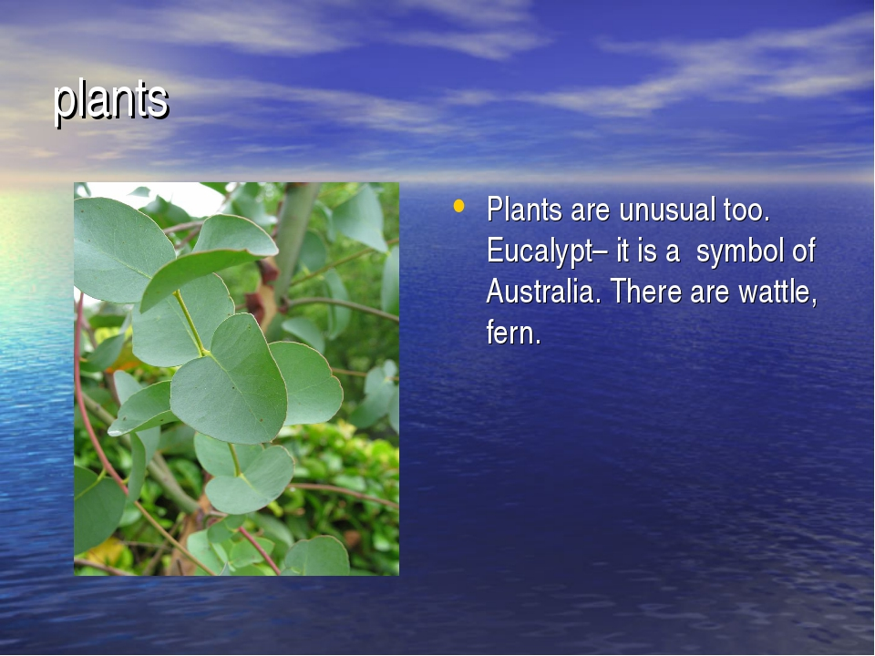 plants Plants are unusual too. Eucalypt– it is a symbol of Australia. There a...