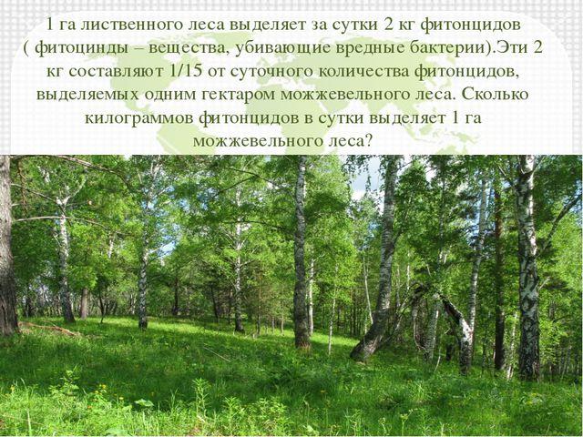 1 га лиственного леса выделяет за сутки 2 кг фитонцидов ( фитоцинды – веществ...