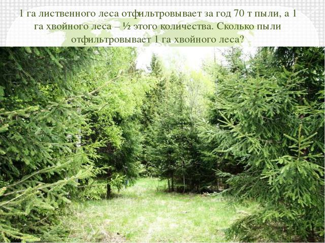 1 га лиственного леса отфильтровывает за год 70 т пыли, а 1 га хвойного леса...