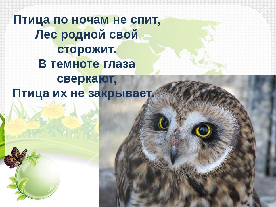 Птица по ночам не спит, Лес родной свой сторожит. В темноте глаза сверкают,...