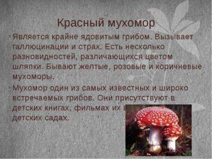 Красный мухомор Является крайне ядовитым грибом. Вызывает галлюцинации и стра