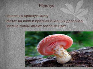 Родотус Занесен в Красную книгу. Растет на пнях и бревнах гниющих деревьев. З