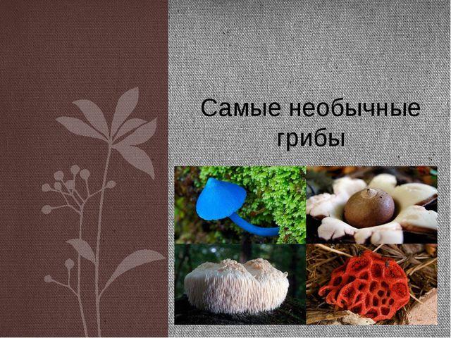 Самые необычные грибы