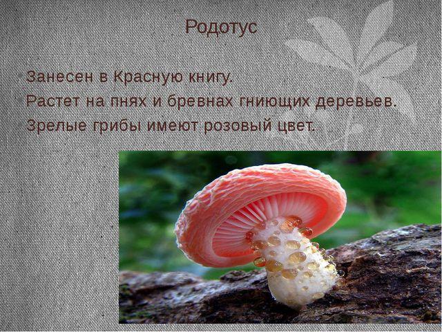 Родотус Занесен в Красную книгу. Растет на пнях и бревнах гниющих деревьев. З...