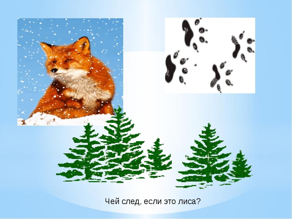 Чей след, если это лиса? Чей след, если это лиса?