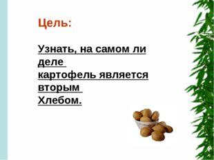 Цель: Узнать, на самом ли деле картофель является вторым Хлебом.