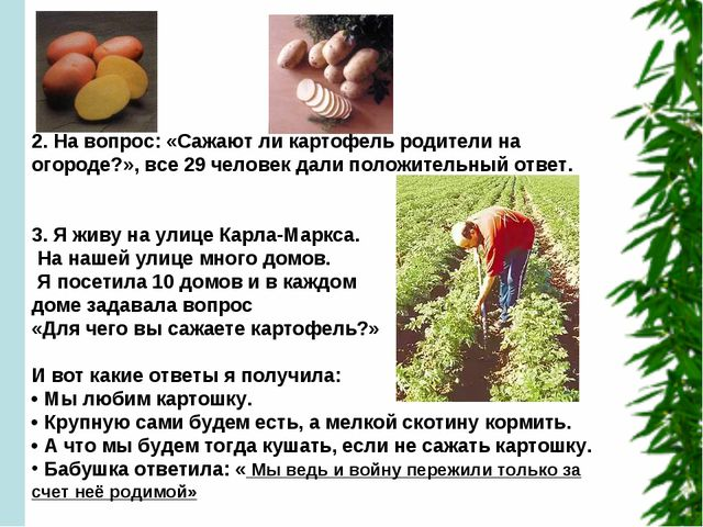2. На вопрос: «Сажают ли картофель родители на огороде?», все 29 человек дал...