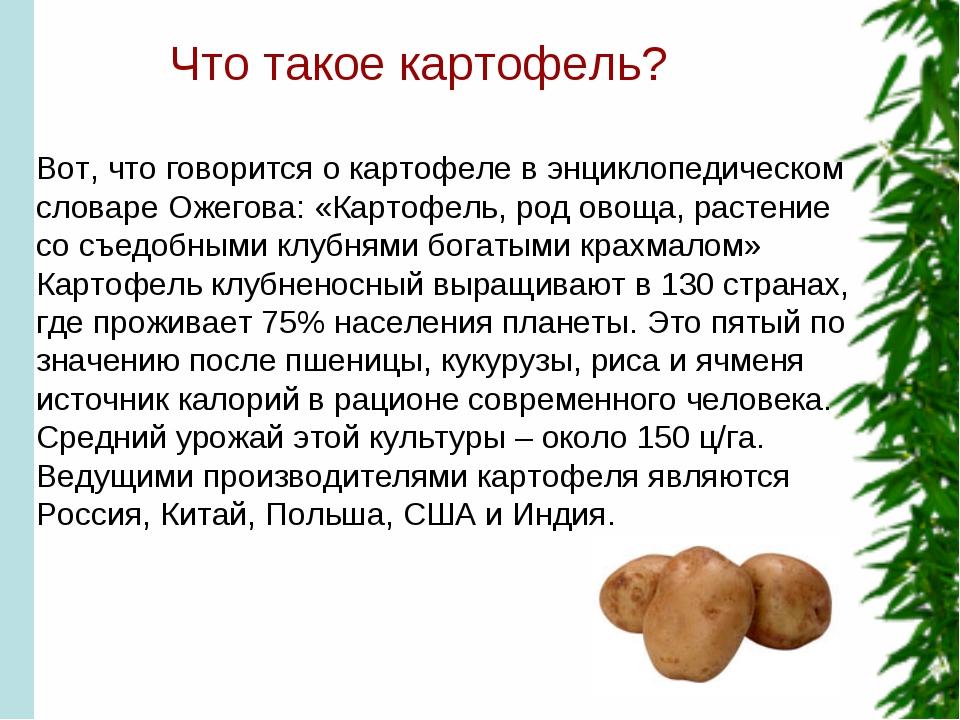 Что такое картофель? Вот, что говорится о картофеле в энциклопедическом слов...