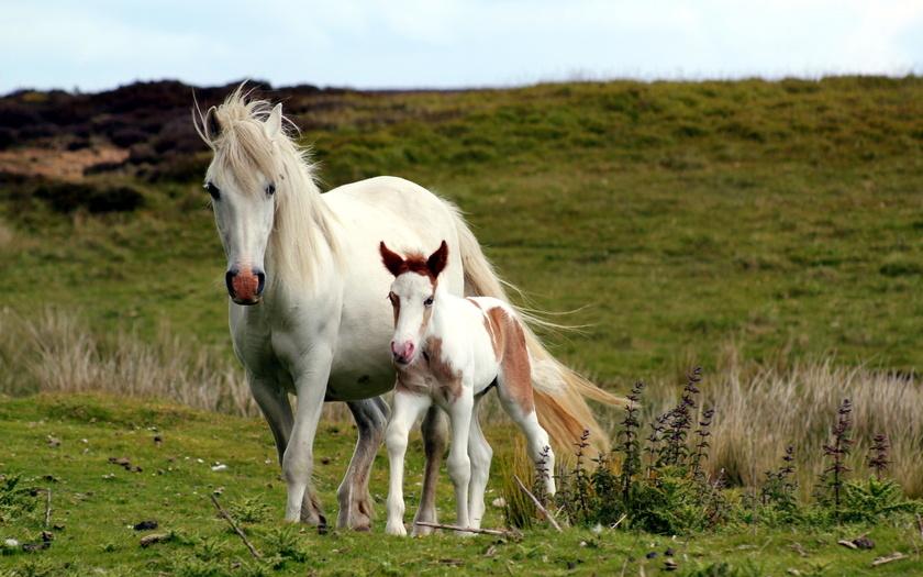 Скачать кони, поле, природа, фото, обои, картинка #12374168 - a-matata.ru