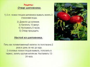 Рецепты: Отвар шиповника. 1) 2 ст. ложки плодов шиповника вымыть залить 2 ст