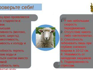 Проверьте себя! 1. У овец ярко проявляется рефлекс стадности и тебеневки. 2.