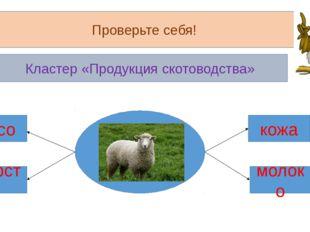 Проверьте себя! Кластер «Продукция скотоводства» мясо шерсть кожа молоко