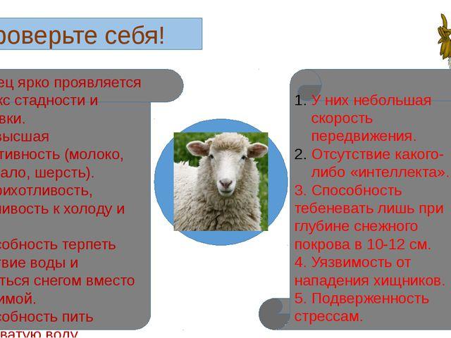 Проверьте себя! 1. У овец ярко проявляется рефлекс стадности и тебеневки. 2....