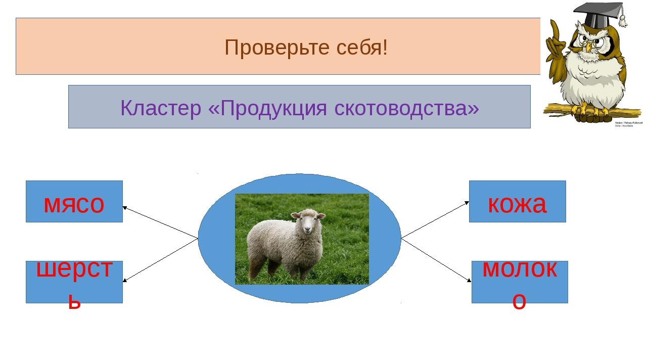 Резкое увеличение поголовья скота привело к возникновению:
