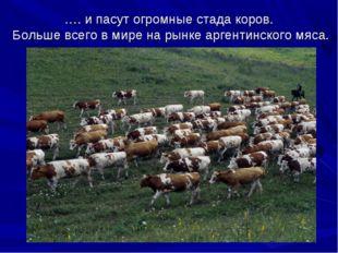 …. и пасут огромные стада коров. Больше всего в мире на рынке аргентинского м