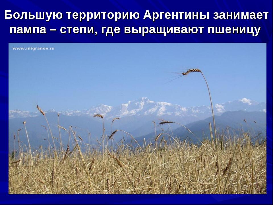 Большую территорию Аргентины занимает пампа – степи, где выращивают пшеницу
