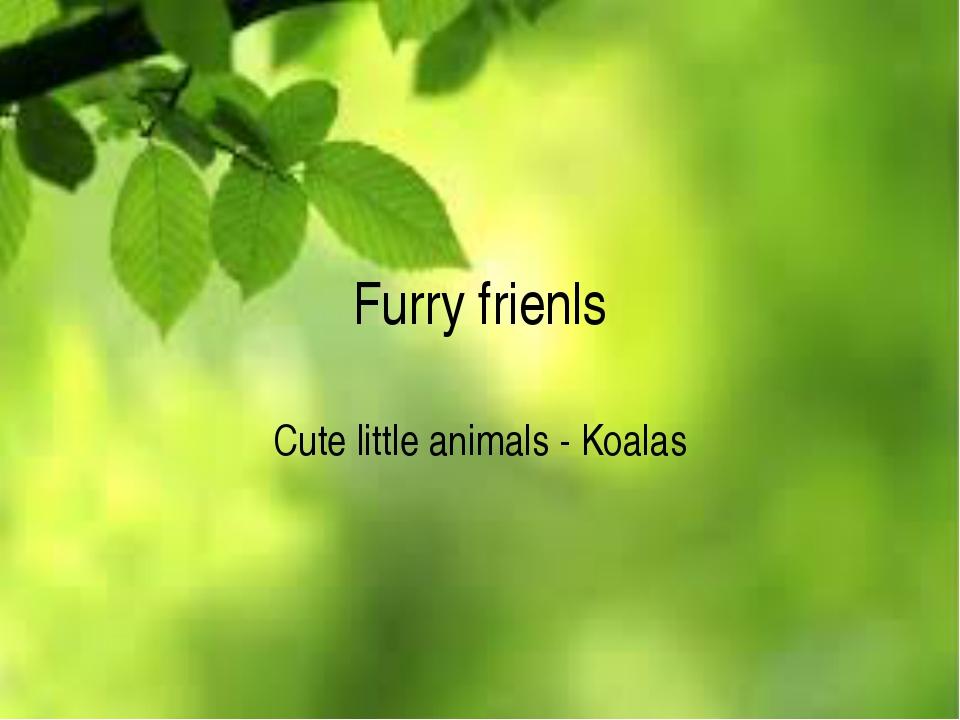 Furry frienls Cute little animals - Koalas