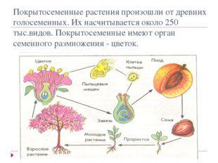 Покрытосеменные растения произошли от древних голосеменных. Их насчитывается
