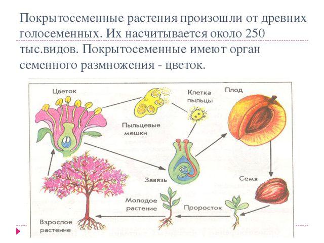 Покрытосеменные растения произошли от древних голосеменных. Их насчитывается...