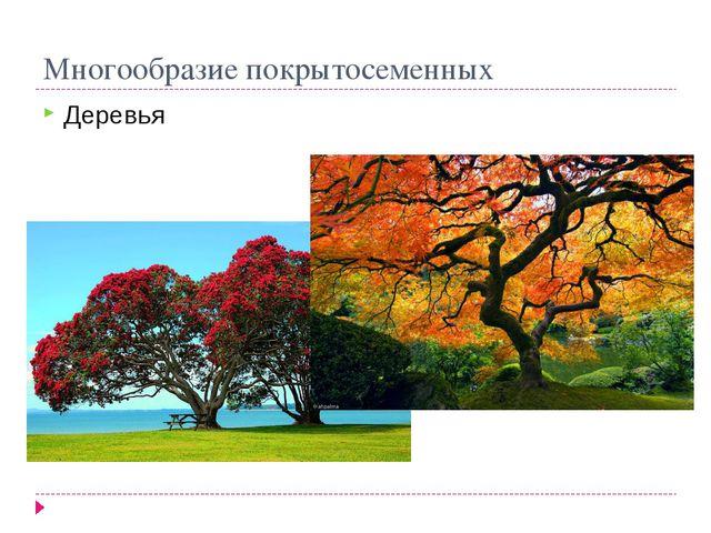 Многообразие покрытосеменных Деревья