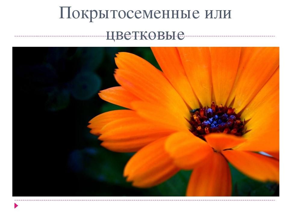 Покрытосеменные или цветковые